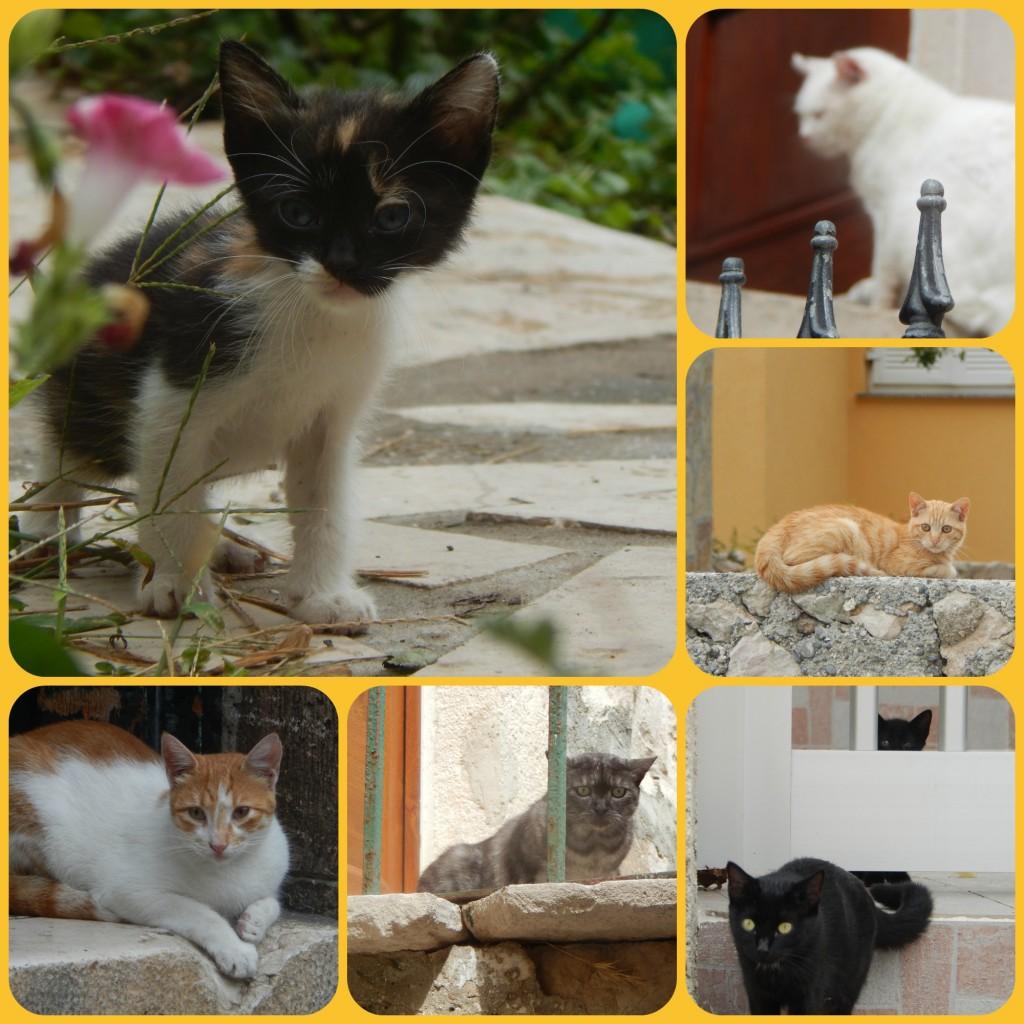 Kroatien Katzencollage