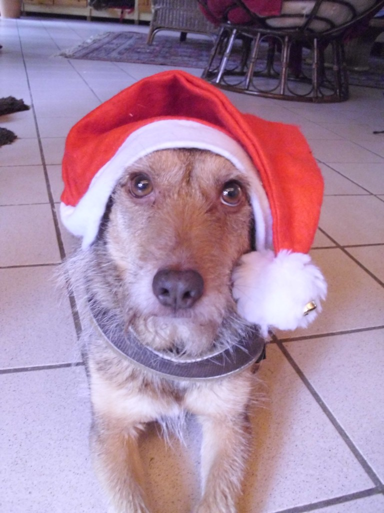 Chip Weihnachten 2012