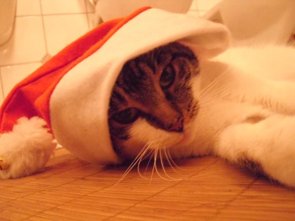 Mikesch Weihnachten 2012