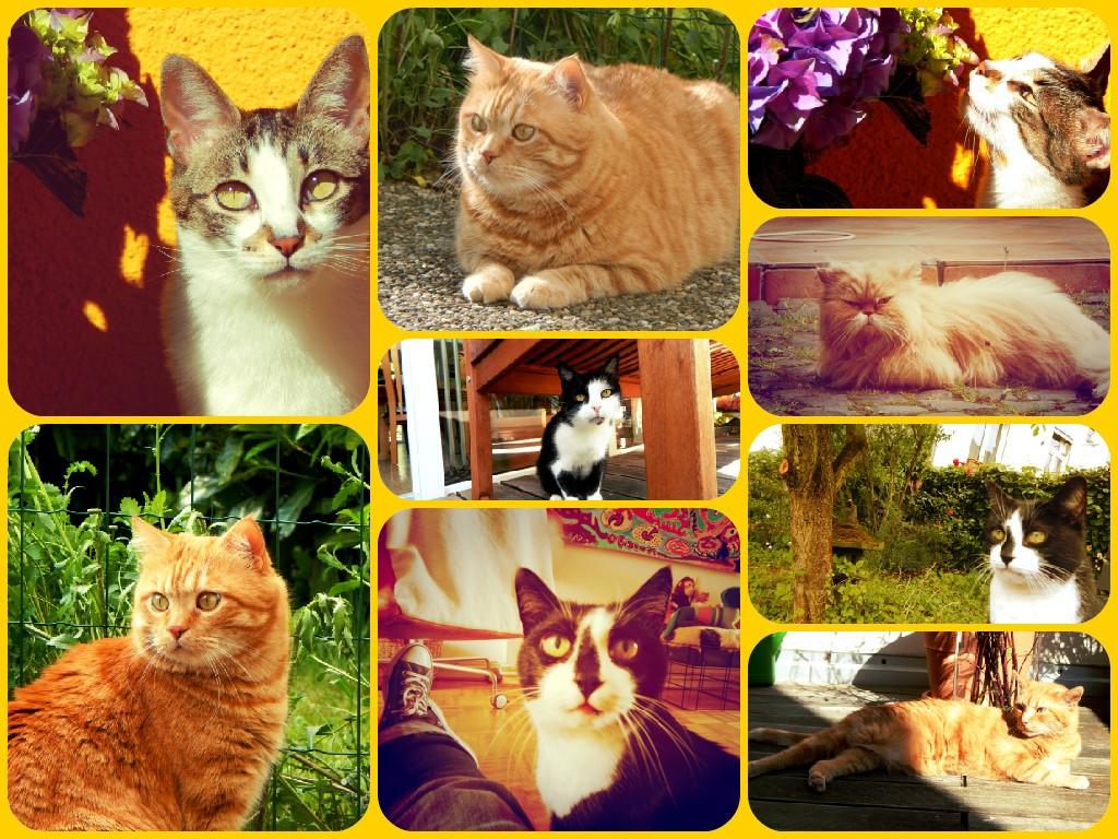 FotorCreated Katzen